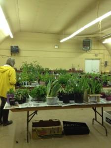 2014 Plant Sale