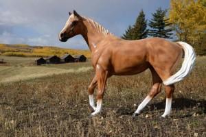 Priddis Fair - Name the Horse