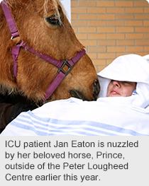 ns-horse-story