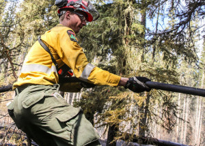 Forest Fire fighter