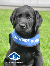 BC & Alberta Guide Dogs, a registered charity that breeds, raises and professionally trains Guide Dogs and Autism Support Dogs, came up with corporate giving options that engage employees long-term.
