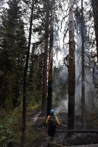 Fire fighter and lightning struck tree.WL fire