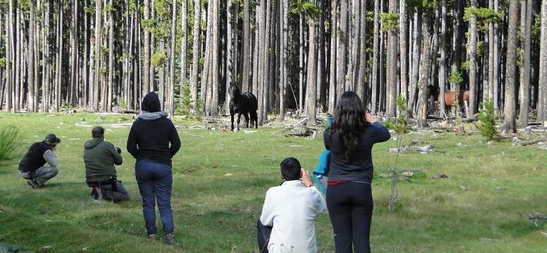 Fourth-year veterinary medicine students visit an area by Sundre to observe feral horses in the Alberta foothills for their EcoHealth National Rotation, hosted this year by the University of Calgary. Photos by Sandy Bell