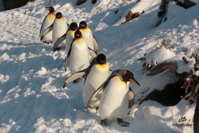 PenguinWalkTeaser3WM-Smaller