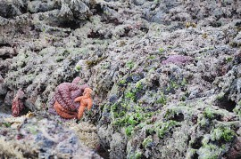 Scientists are coming together to try to keep sea stars a common sight on our coasts.