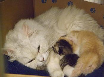 sry-cat-w-kittens-no-date-350