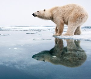 beyond polar bear