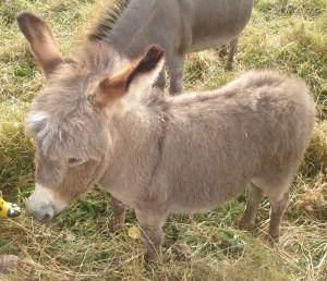 ff-donkey