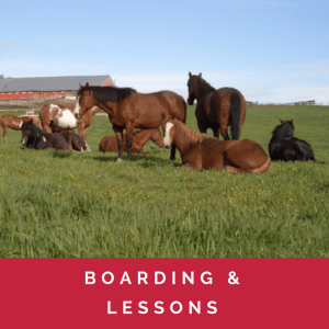 DJ Ranch ~ Boarding, Lessons, Day Camps