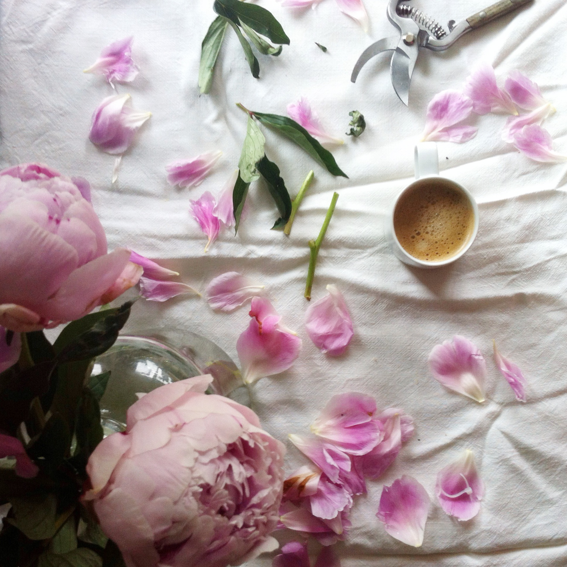 Coffee and Peonies