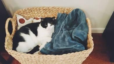 https://gatheringbooks.org/2016/04/01/poetry-friday-cat-blessing/