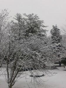 winter pics 3