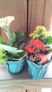 miniflowers3