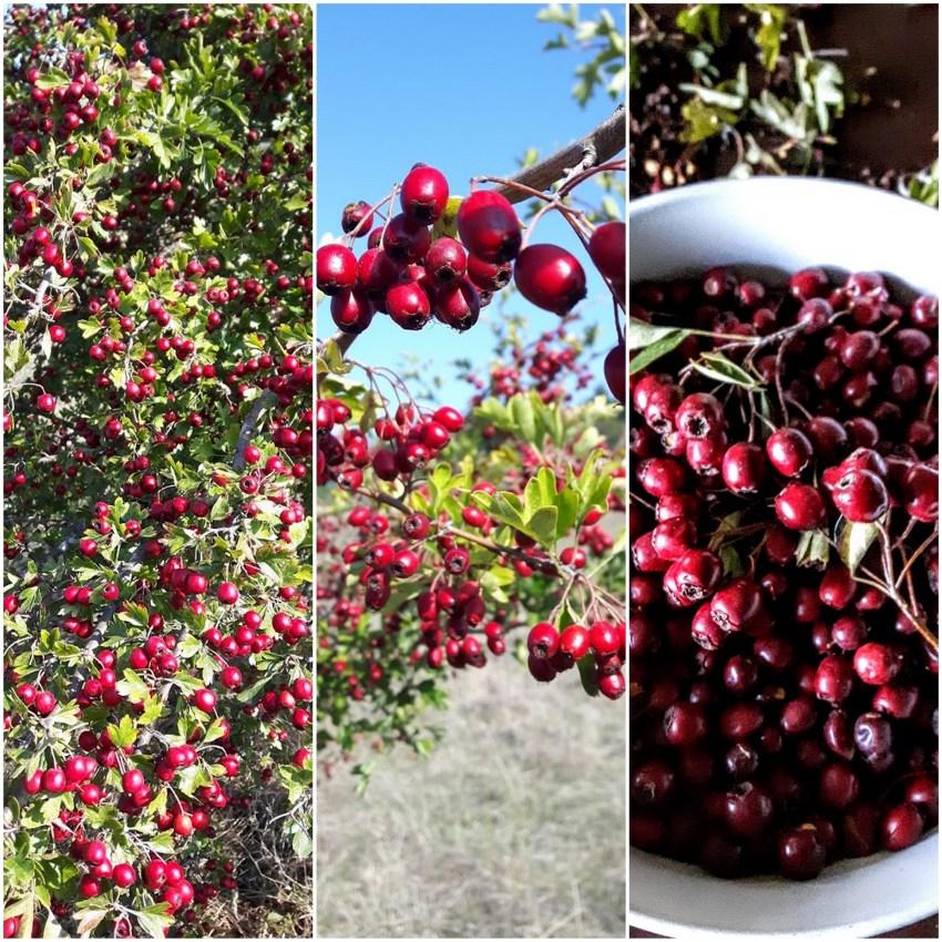 autumn harvest15.jpg
