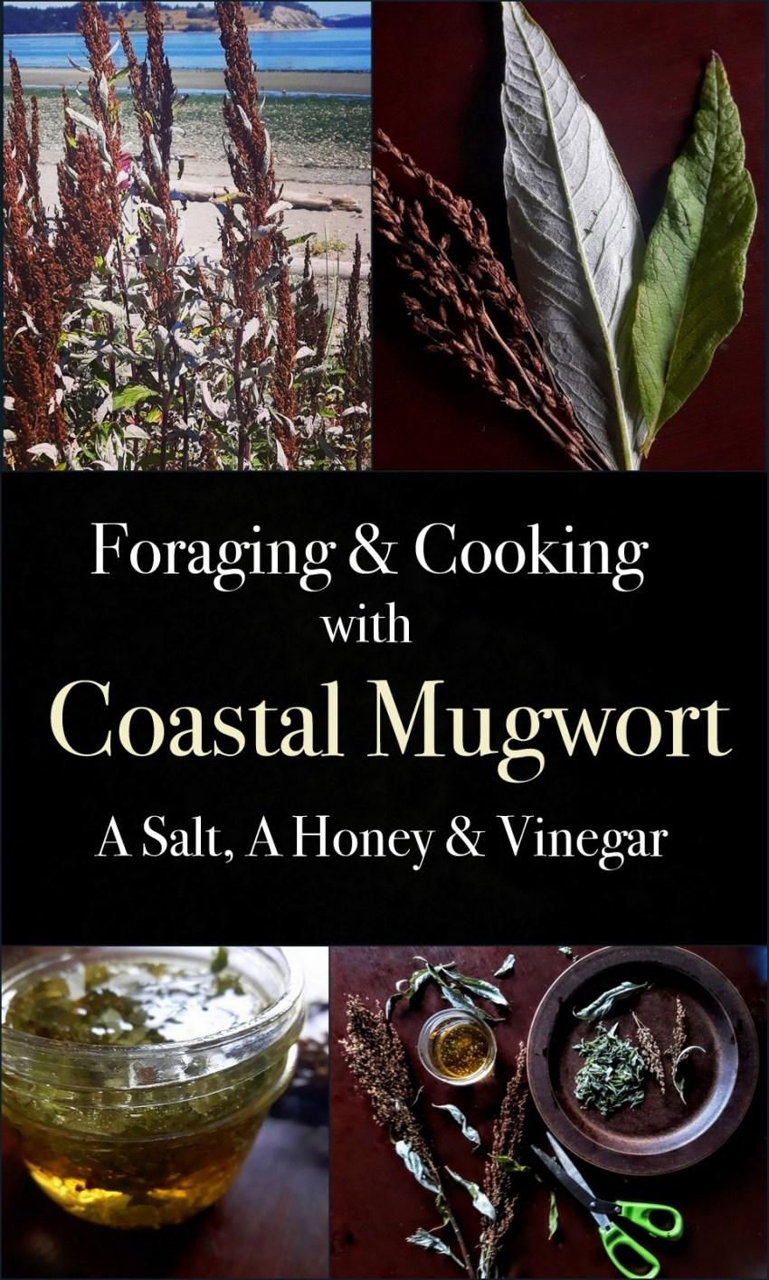 coastalmugwort2-001