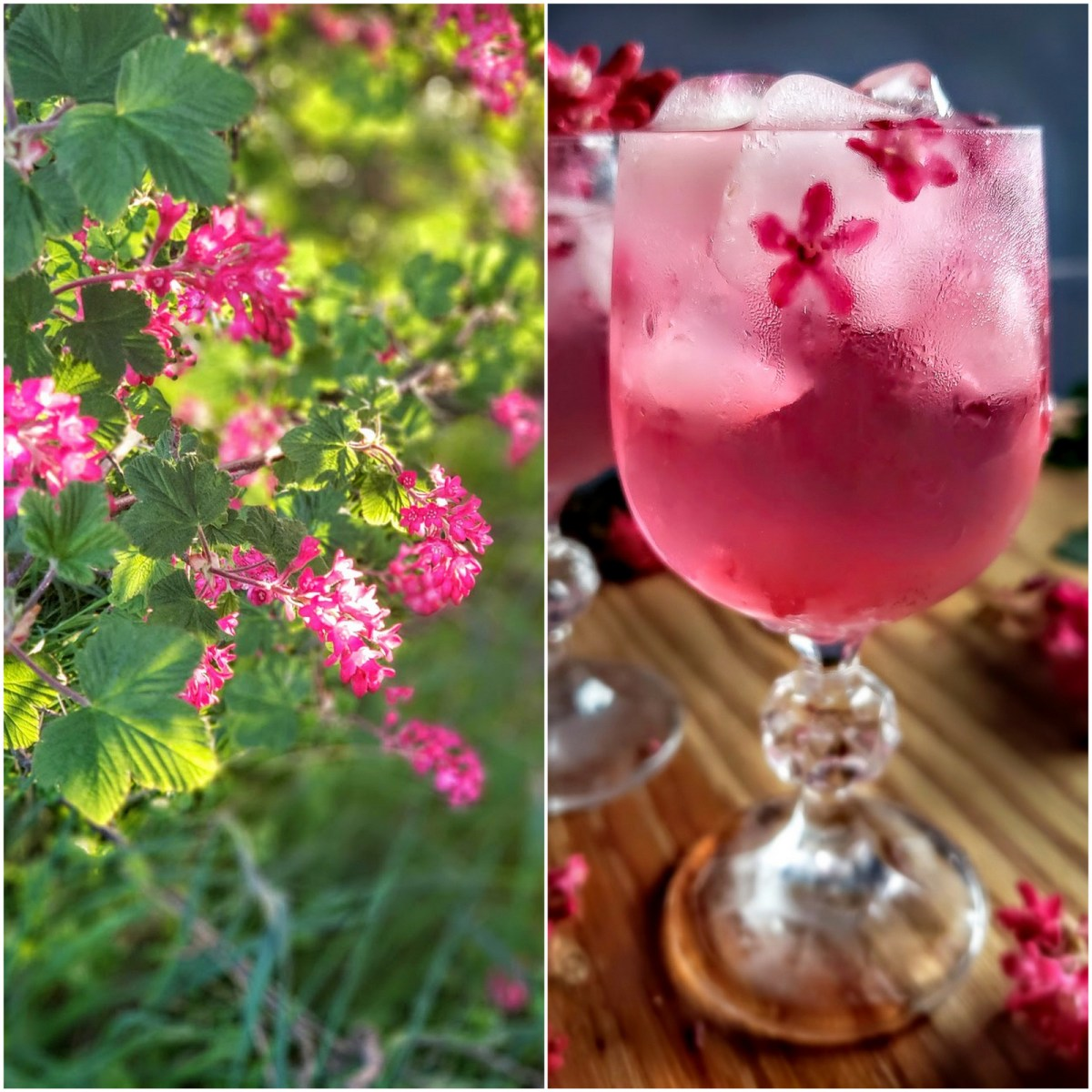 Drinking in Spring Blossoms: Red Flowering Currant Elixir