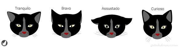 expressoes-faciais-gatos