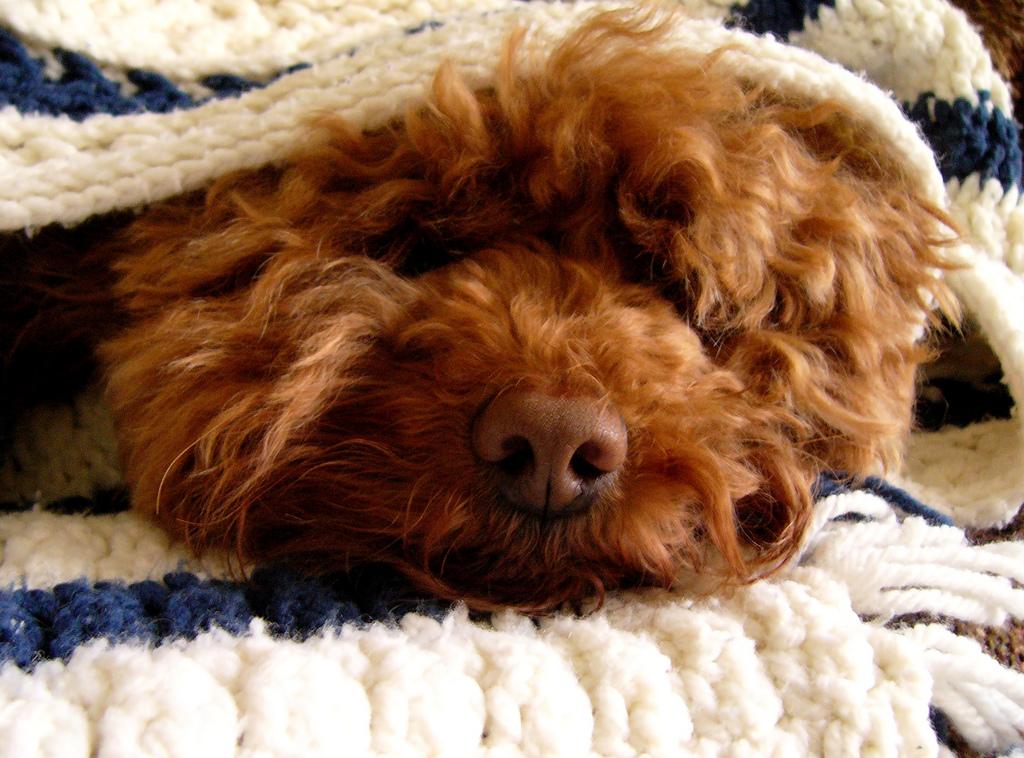 4 opções de banho a seco para cães no frio