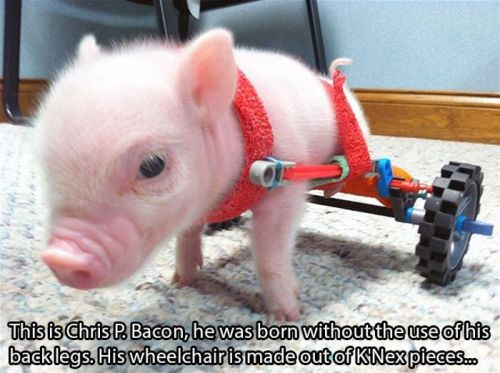 people-doing-amazing-things-for-animals-03171
