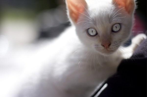 gatos visao ultravioleta