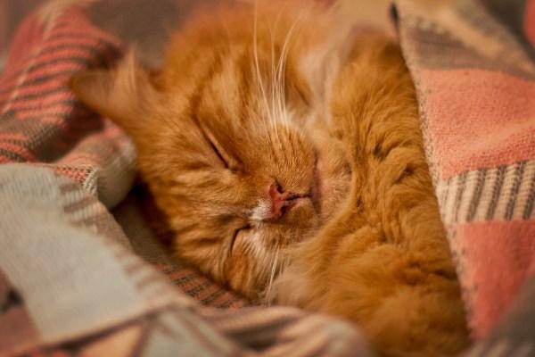 gato gatinho frio