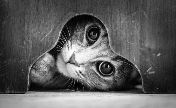 cats16