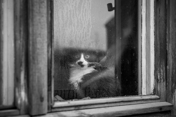cats19