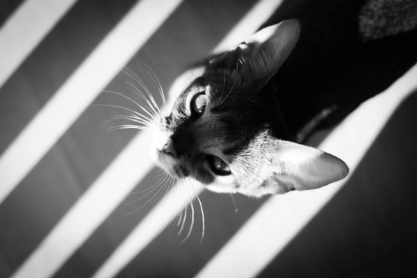 cats20
