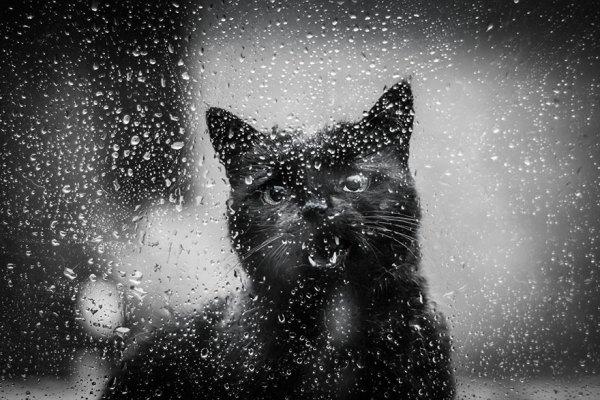 umcat