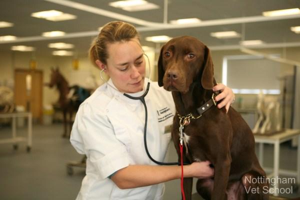 como escolher veterinario
