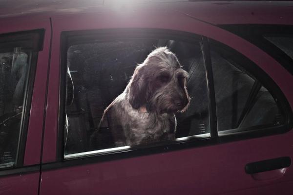 cachorros carros 2