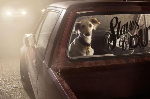 cachorros carros 5