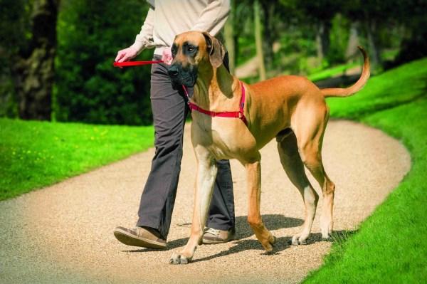 easy walk anti puxao
