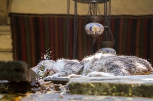 gatos istambul 5