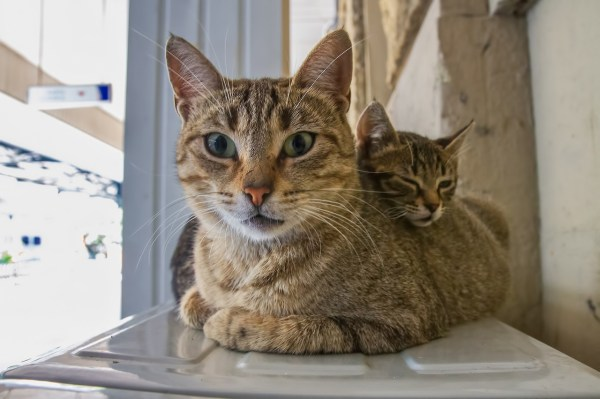 gatos istambul