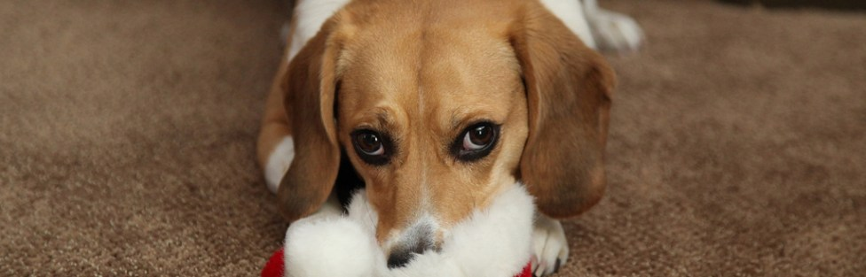 Carta de um cachorrinho para o Papai Noel