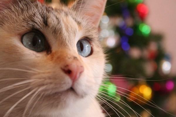 gato natal carta para o papai noel