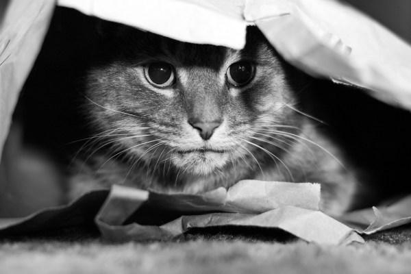 brinquedos que os gatos amam e não custam nada