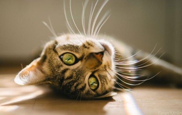incriveis-bigodes-gatos
