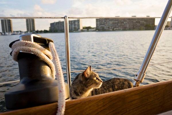 Gata adotada viaja o mundo com seus dois humanos3