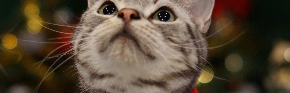 Carta de um gatinho para o Papai Noel – Versão 2015