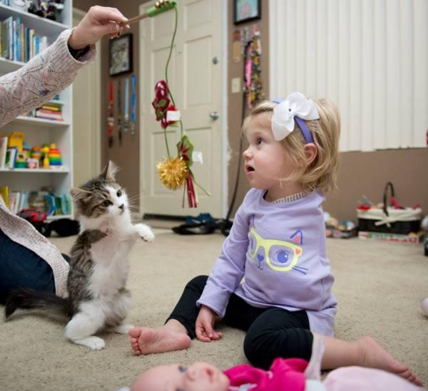 gatinha-tres-patas-adotada-menina-braco-amputado (3)