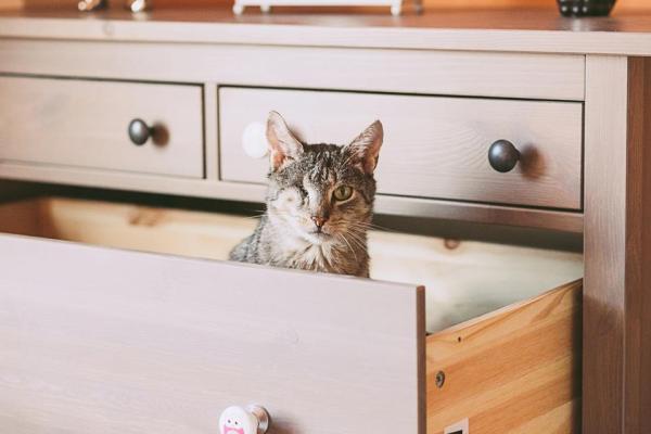 Sou o Bosman. Tenho 12 anos. Não tenho um olhinho e sou diabético, mas ainda sou um gato.