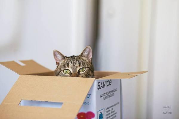Sou a Keiko. Tenho dois anos e meio. Não tenho uma perninha, mas ainda sou uma gata.