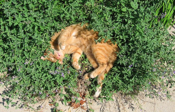 jardim-sensorial-plantas-gatos3