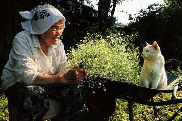 senhora-misao-gatinho-fukumaru-2
