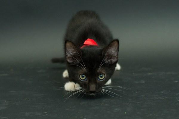 casey elise gatos pretos 2