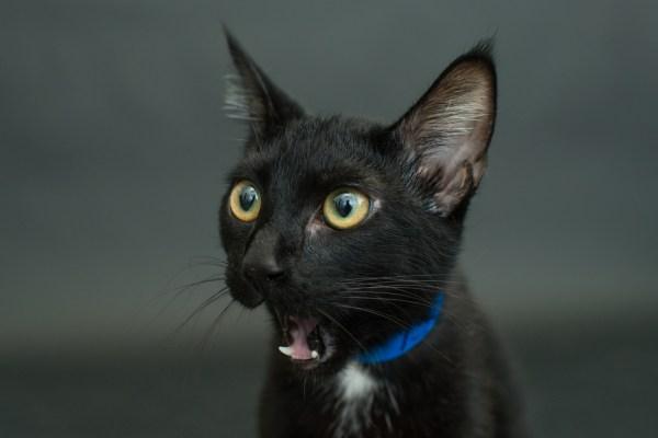 casey elise gatos pretos 3