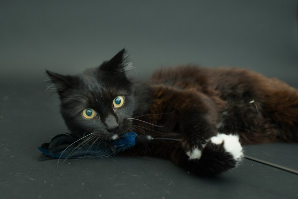 casey elise gatos pretos 6