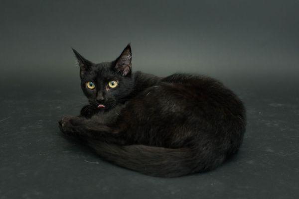 casey elise gatos pretos 8